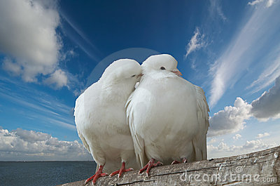 Palomas de Wihte en amor