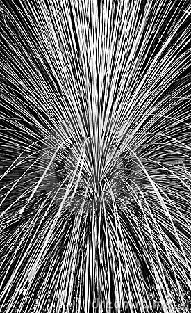 Pampas Grass Abstract