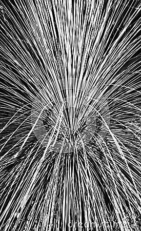 Pampas Grass Abstract