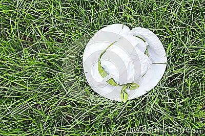 Panama on green grass