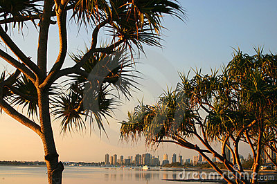 Pandanus Trees In The Early Morning