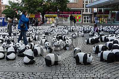 Pandas in Kiel Editorial Stock Photo