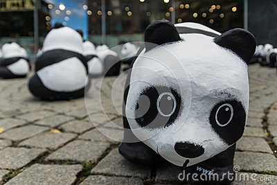 Pandas in Kiel Editorial Stock Image