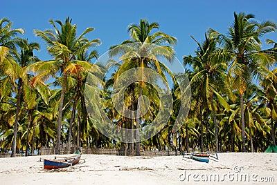 Pangane Beach, Mozambique