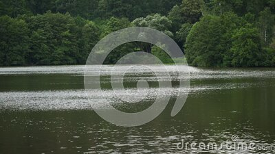 Panning video over calm lake with trees in background on overcast day stock footage