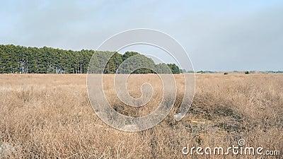 Panorama av landskapet av stäppen och skogen, Ukraina, Kherson region arkivfilmer