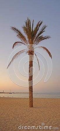 Panorama de la puesta del sol de la palmera