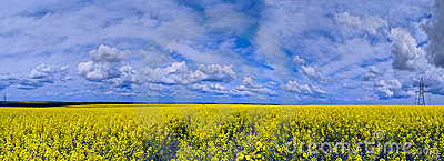 Panorama de paysage