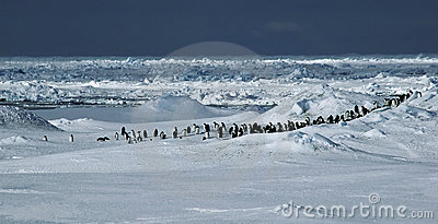 Panorama do pinguim