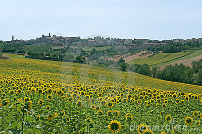 Panorama of Filottrano (Marches) with sunflowers