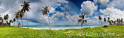 Panorama of green and sand beach with palms
