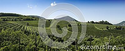 Panorama italiano dos vinhedos