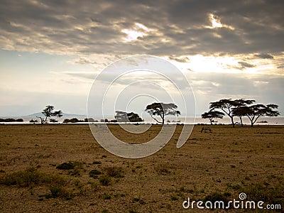 Panorama lake Naivasha with zebras