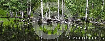 Panorama of a marsh.