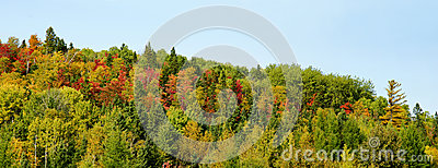 Panorama of mountain with colorful trees