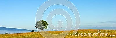 Panorama tree