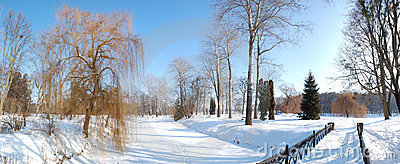 The panorama of trees and river covered with snow