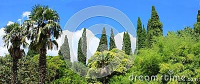Panorama  tropical trees
