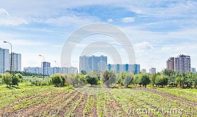 Panorama of urban garden