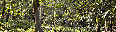 Panorama view of  forest