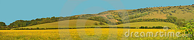 Panorama of Yellow Field and Hill