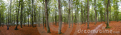Panoramic autumn forest