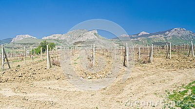 Panoramic landscape with vineyards