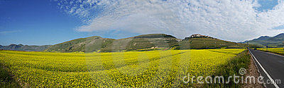 Panoramic landscape with yellow flowers
