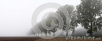 Panoramic - row of trees