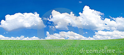 Panoramic view of blissful grassland