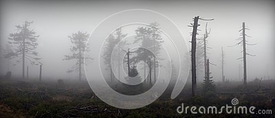 Panoramic View of Mystical Silhouettes of Trees