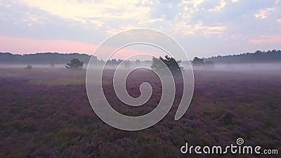 Panoramica porpora della brughiera stock footage