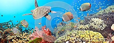 Panoramy underwater