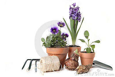 Pansies and Hyacinth With Gardening Tools