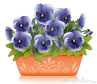 Pansies wiosna