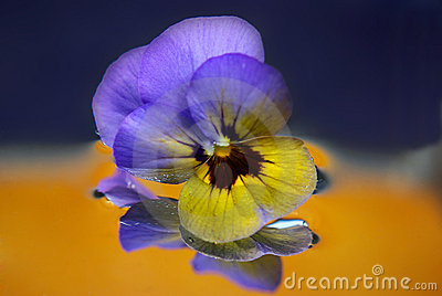 Pansy flower abstract