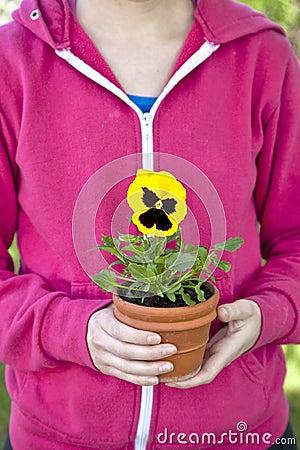 Pansy Gardener