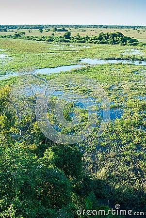 Pantanal wetland, Brazil Stock Photo