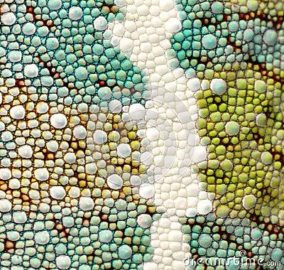 Free Panther Chameleon Skin Detail Royalty Free Stock Photos - 14893258