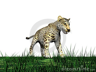 Panther and grass