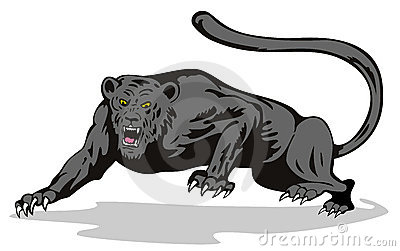 Panther on the prowl