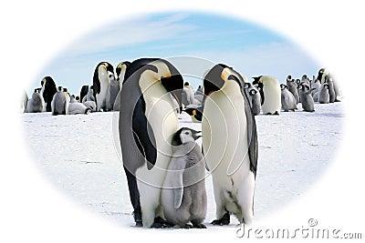 Papa, Mama and I