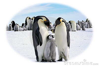 Papa, Mutter und I