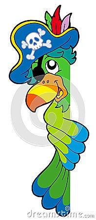 Papagaio de espreitamento do pirata