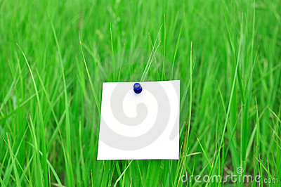 Paper attached to green grass