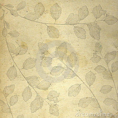 Paper background with scethed lea