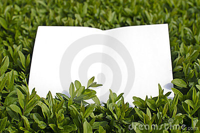 Paper in green grass