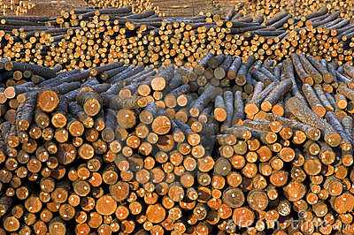 Tree Trunks Wood Logs Piled Outside Paper MIll