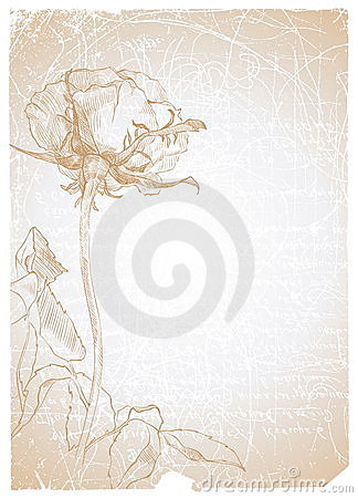Paper with rose