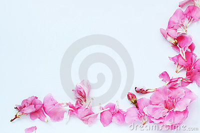 Paper sheet with pink oleander